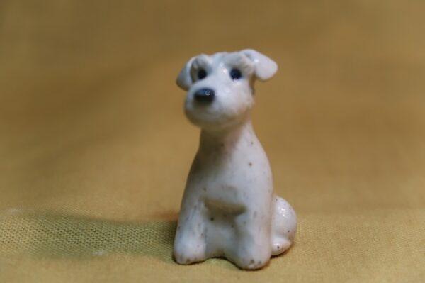 豆犬 白シュナ